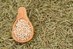 Grains of red and white sorghum Sorghum.  Stock Photos