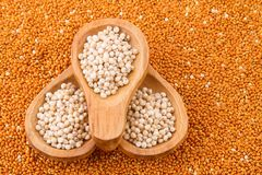 Grains of red and white sorghum Sorghum.  Stock Photography