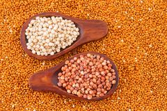 Grains of red and white sorghum Sorghum.  Stock Image
