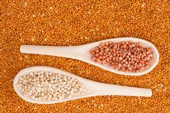 Grains of red and white sorghum Sorghum.  Royalty Free Stock Photo