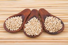 Grains of red and white sorghum Sorghum.  Royalty Free Stock Image