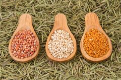 Grains of red and white sorghum Sorghum.  Stock Images
