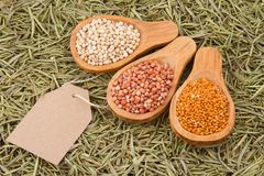 Grains of red and white sorghum Sorghum.  Stock Photo