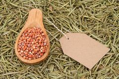 Grains of red and white sorghum Sorghum.  Royalty Free Stock Photography