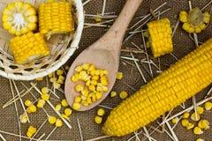 Grains of ripe corn Stock Images