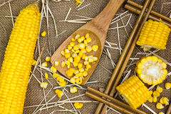Grains of ripe corn Royalty Free Stock Images