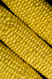 Grains of ripe corn Royalty Free Stock Image