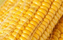 Grains of ripe corn Royalty Free Stock Photo