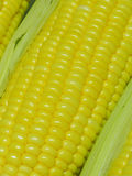 Grains of ripe corn Royalty Free Stock Photos