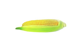 Grains of ripe corn. Fresh raw corn cob with leaves isolated on the white background Stock Photography