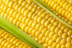 Grains of ripe Corn /  Macro Royalty Free Stock Image