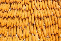 Grains of ripe corn, Raw corn, Fresh corn, Corn background Royalty Free Stock Photo