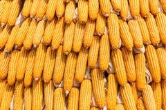 Grains of ripe corn, Raw corn, Fresh corn, Corn background Royalty Free Stock Photography