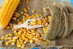 Grains of ripe corn on wooden background. Corn cob on wooden background.  Royalty Free Stock Image