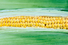 Grains of ripe sweetcorn can be used as Background Royalty Free Stock Photography