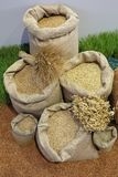 Grains in Sacks. Wheat Grains Cereal Crops in Sacks Royalty Free Stock Photos