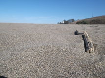 Grains of Sand/Driftwood. Taken eyelevel to the beach, with a single piece of driftwood.  Farmhouse in background Stock Photography