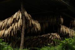 Grains secs Photographie stock libre de droits