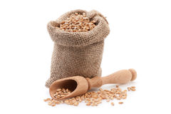 Grains in small burlap sack Stock Photography