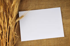 Grains on traditional fabrics Stock Photography