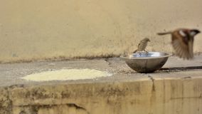 Grains and Water for the House Sparrows stock image