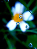 Grains of water. Reflection of flowers in the grains of water stock images