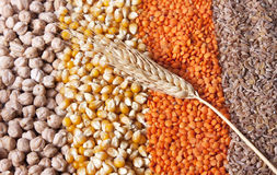 Grains and wheat. Colourful grains are together in forms of stripe with a wheat spica Royalty Free Stock Photos