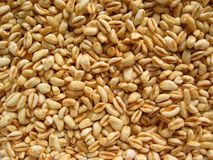 Grains of wheat Royalty Free Stock Photos