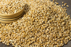 Grains of wheat in a box on  table closeup Royalty Free Stock Photography
