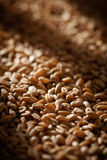 Grains of wheat close-up with sun light effect Royalty Free Stock Photography