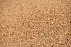 Grains of wheat Royalty Free Stock Image