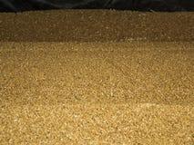 Grains of wheat. Meeting stored wheat grain Stock Photos