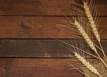 Grains of Wheat on weathered wooden background. Grains of Wheat on rustic wooden background with lot of copy-space. Flat Lay - useful for web design Stock Images