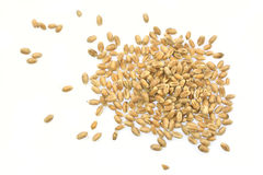 Grains of wheat. Rye grain spilled, perfect for background Stock Photos