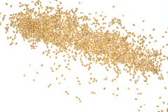 Grains of wheat. Rye grain spilled, perfect for background Stock Image