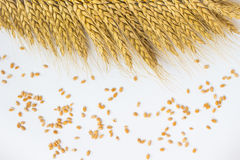 Grains of wheat and wheat ears on a white background Royalty Free Stock Photos