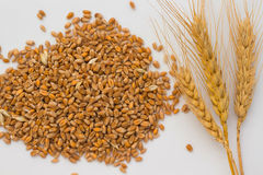 Grains of wheat and wheat twig on a white Stock Photos