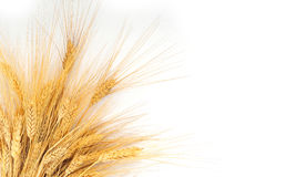 Grains Stock Images