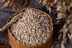 Grains of whole oats in a wicker box and ears of various cereals royalty free stock photography