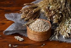 Grains of whole oats in a wicker box and ears of various cereals royalty free stock images