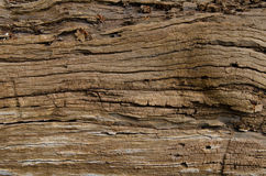 Grains on wood. Old texture Royalty Free Stock Photography