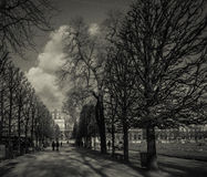 Grainy wintery trees in a park. A black and white photo of an urban park, in the winter, with bare trees and a cloudy sky Stock Photos