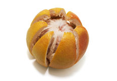 graipefruitpink Royaltyfri Fotografi