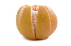graipefruitpink Fotografering för Bildbyråer
