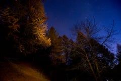 Grająca główna rolę noc w lesie Zdjęcie Stock