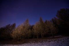 Grający główna rolę niebo w lesie Fotografia Stock