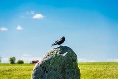 Gralha britânica em uma pedra de Stonehenge Imagem de Stock Royalty Free