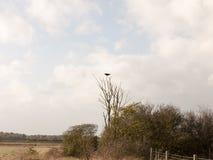 A gralha do corvo empoleirou-se acima da cabeça sobre o outono do ramo fotos de stock