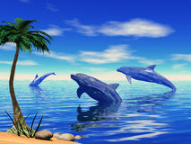 gram delfinów Fotografia Royalty Free