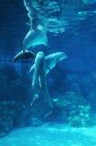 gram delfinów Zdjęcia Stock